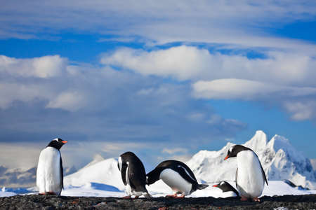 penguins dreaming sitting on a rock, mountains in the background Stock Photo - 8986831