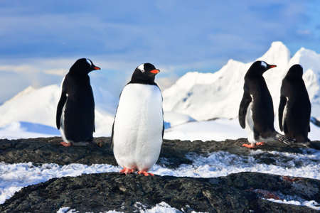 penguins dreaming sitting on a rock in Antarctica, mountains in the background photo