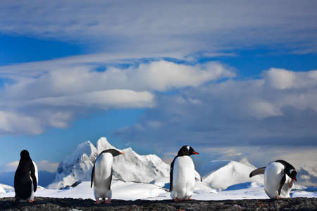 penguins dreaming sitting on a rock, mountains in the background Фото со стока