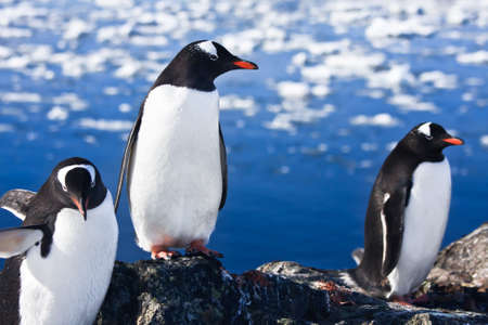 group of penguins having fun in the snowy hills of the Antarctic photo