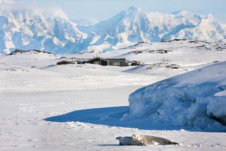 antarctica: Beautiful landscape in  Antarctica