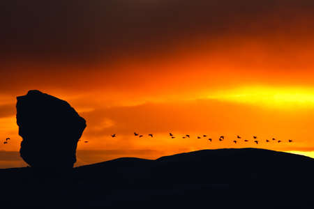 Birds fly in the background of a beautiful sunset. Antarctic photo