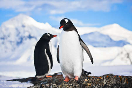 penguins dreaming sitting on a rock, mountains in the background Stock Photo