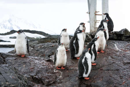 polar station: group of penguins on the rocks in Antarctica Stock Photo
