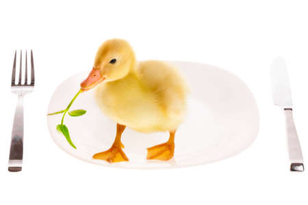 Little duckling on a plate isolated on white photo