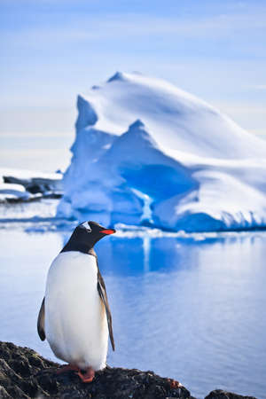 penguin have fun standing on the rocks in Antarctica Stock Photo