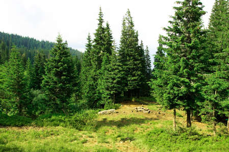Beautiful glade on a lovely summer day photo