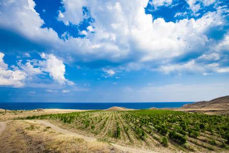 vineyards in Crimea. beautiful landscape photo