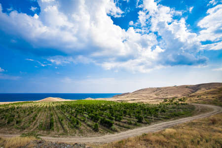 vineyards in Crimea. beautiful landscape photo