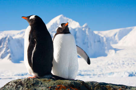 antarctica: Two penguins dreaming sitting on a rock, mountains in the background Stock Photo