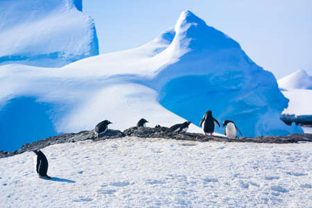 penguins resting on the stony coast of Antarctica photo
