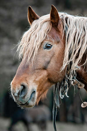 A beautiful horse in the countryside photo