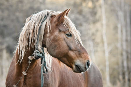 A beautiful horse in the countryside Stock Photo