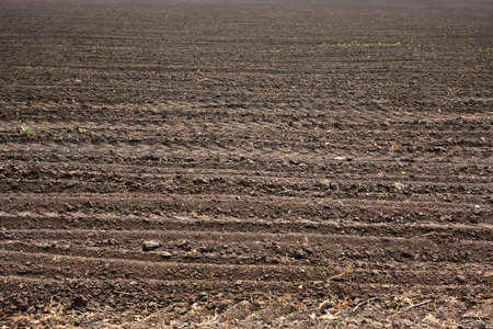 Fresh soil background closeup Stock Photo - 12389234