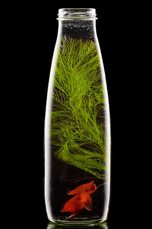 bottle with red fish on black background Stock Photo - 12389199