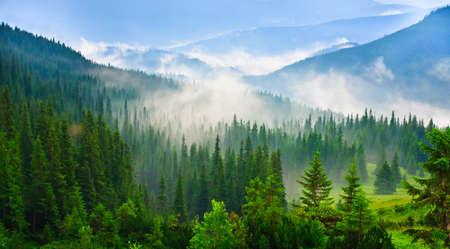 arbre vue dessus: Beau paysage montagnes des Carpates en