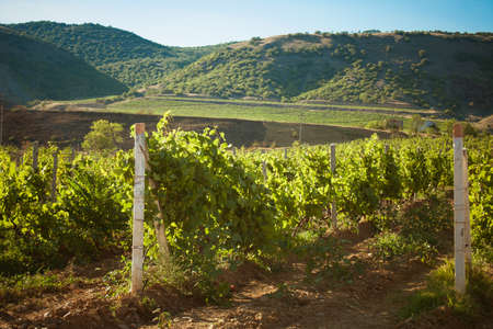 beautiful landscape with vineyard and mountains photo