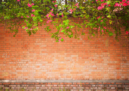 grunge wall background with flowers photo