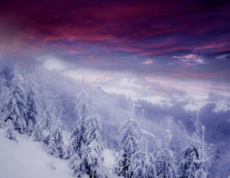 hoar: beautiful winter  scenery