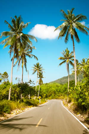 asian trees: Nice asfalt road with palm trees against the blue sky and cloud