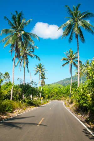 Nice asfalt road with palm trees against the blue sky and cloud photo