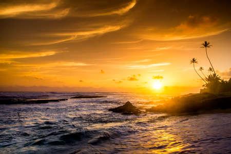 Extremely beautiful  sunset under the coconut plams on Sri Lanka beach
