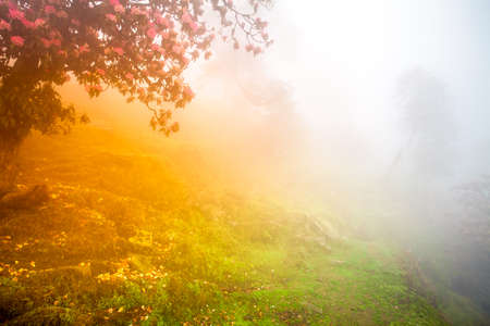 Forest background  Autumn tree with flowers in morning fog Stock Photo