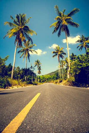 tree line: Nice asphalt road with palm trees against the blue sky and cloud