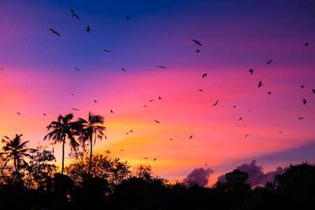 sunset with birds at Bird island, Koggala, Sri Lanka photo