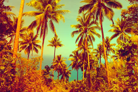nice background: View of nice tropical background with coconut palms. Thailand
