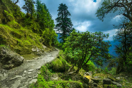 subtropical: Subtropical forest in Nepal