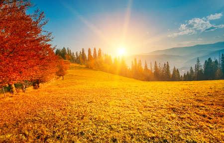 mountain meadow: Colorful autumn landscape. Carpathian mountains, Ukraine, Europe. Stock Photo