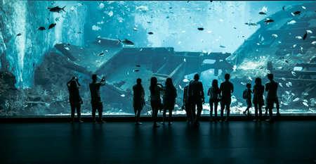ballena azul: Gran Acuario - Gente Silueta mirando el pescado incre�ble. Singapur