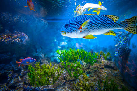 pez pecera: Arrecifes de Coral y pescados tropicales en luz del sol. Singapur acuario