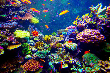 Coral Reef and Tropical Fish in Sunlight.