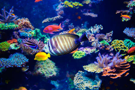 Colorful aquarium, showing different colorful fishes swimming Imagens