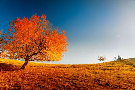 scenery: Colorful autumn landscape. Carpathian mountains, Ukraine, Europe. Stock Photo