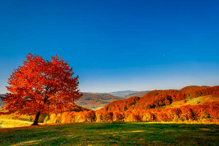Colorful autumn landscape. Carpathian mountains, Ukraine, Europe. Standard-Bild