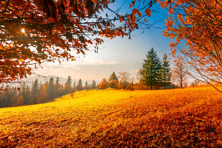 Colorful autumn landscape. Carpathian mountains, Ukraine, Europe. 写真素材