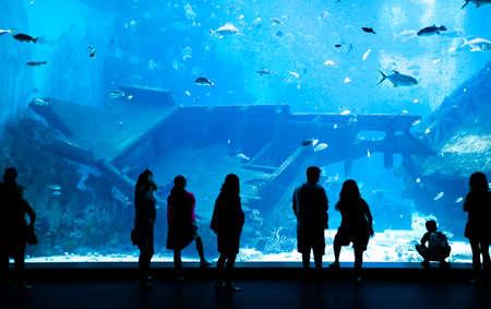 Grote Aquarium - Mensen Silhouet kijken naar de prachtige vis. Singapore Stockfoto