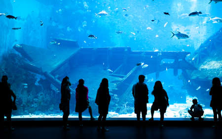 whale underwater: Large Aquarium - People Silhouette looking at the amazing fish. Singapore