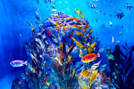 Colorful aquarium, showing different colorful fishes swimming Stock Photo