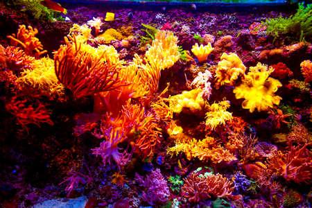 Coral Reef and Tropical Fish in Sunlight. Singapore aquarium Stock Photo