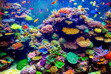 arrecife: Arrecifes de Coral y pescados tropicales en luz del sol. Singapur acuario