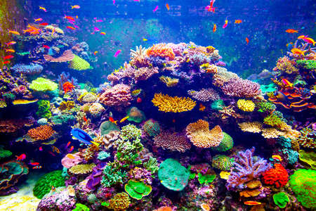 Coral Reef and Tropical Fish in Sunlight. Singapore aquarium Imagens