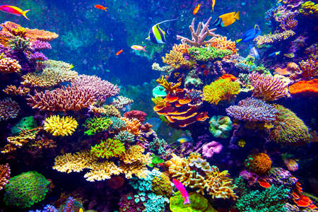 diving: Coral Reef and Tropical Fish in Sunlight. Singapore aquarium Stock Photo