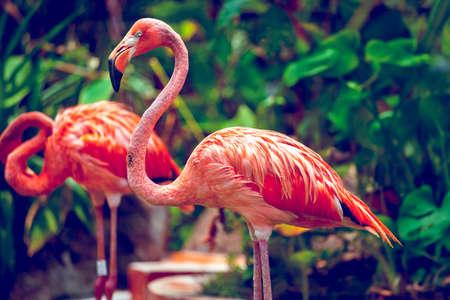 flamenco ave: Flamenco rosado de cerca en el parque zool�gico de Singapur