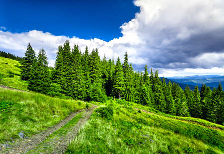 fur trees: Mountain path in the Carpathian mountains. Panorama