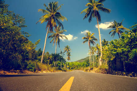 jamaica: Nice asfalt road with palm trees against the blue sky and cloud