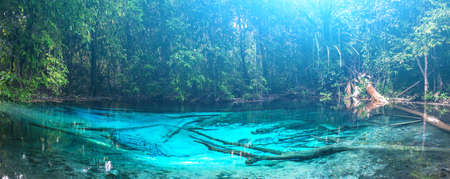 Emerald blue Pool. Krabi, Thailand. Amazing blue water in the beautiful lake at the forest photo